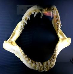 Cretaquarium